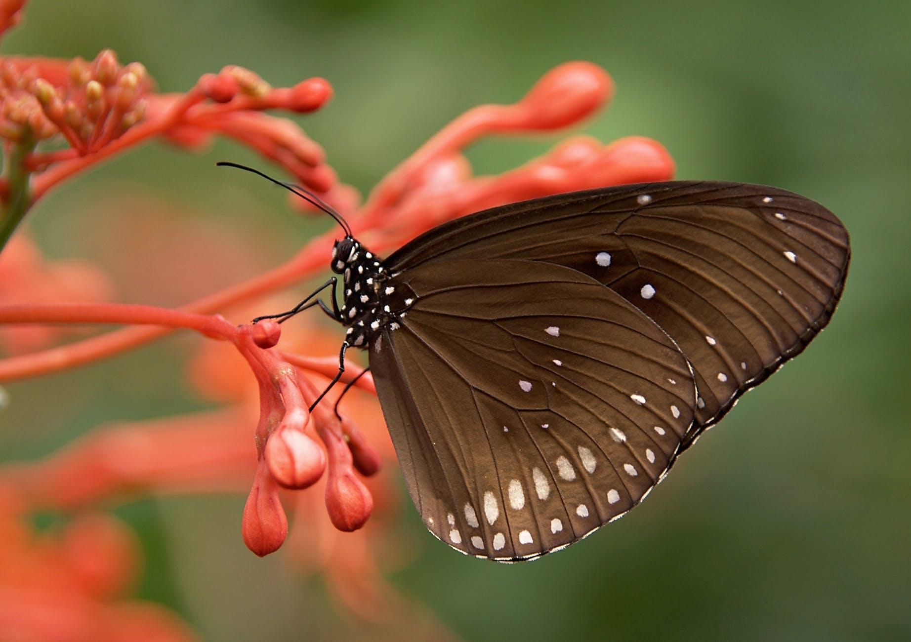 striped-core-butterflies-butterfly-brown-53957.jpeg